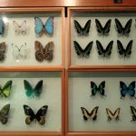 insects_-_kunming_natural_history_museum_of_zoology_-_dsc02562
