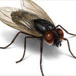 animals_housefly