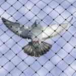 heavy-duty-bird-netting