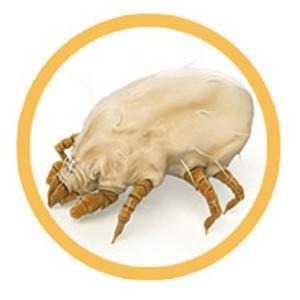dust-mite-1