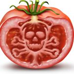 o-contaminated-tomato-facebook