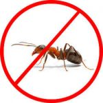 ant-pest-control-service-250x250