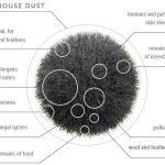 dust-anatomy