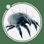 icon-dust-mite
