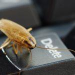 german-cockroach-on-keyboard